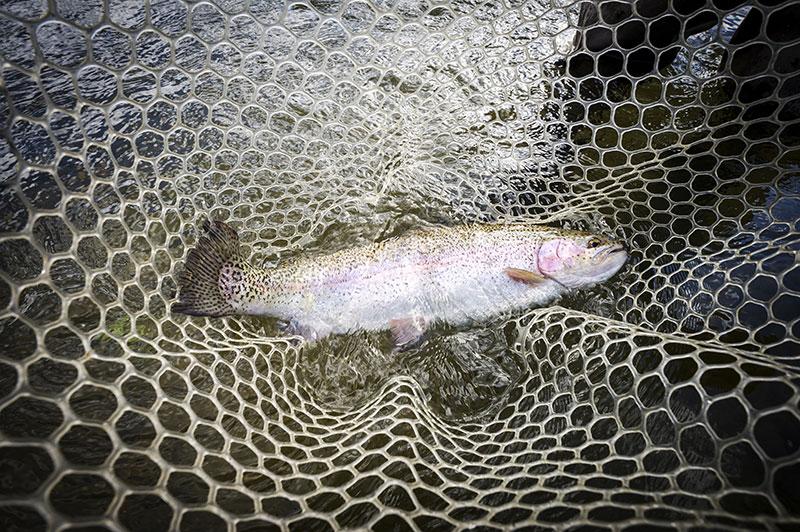 fish-in-net