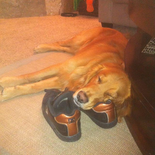 This is the way my boy makes sure I don't leave without him. #mansbestfriend #goldenretriever #onguard