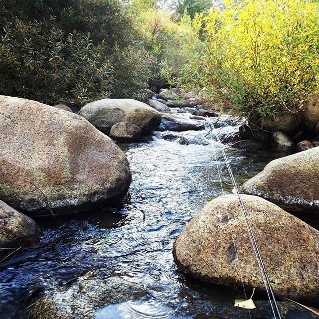 High Sierra creek fishing#wildplaces #alpineflyfishing #dryflies #wildtrout #nature