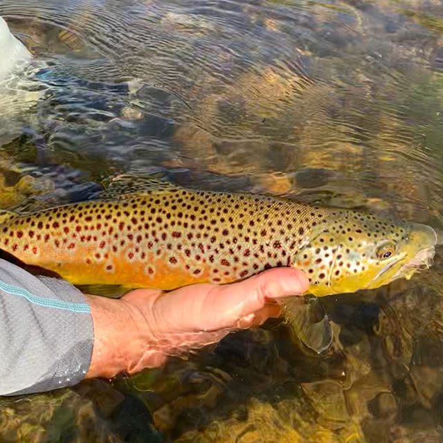 The fish were happy today … As were we !@brassee putting on a clinic ••••#eastsideplayers #alpineflyfishing #scottflyrods #seewhatsoutthere #rossreels #bigdries #browntown #butter #wildtrout #flyfishing #fishpondusa #fishitwell #catchandrelease #gameon #easternsierra